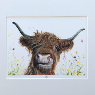 Highland Cow Alfie Art Print Gift Pankhurst Cards and Gifts