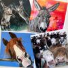 Pankhurst Cards and Gifts Warm Breeze hares, donkey, horse, friesian cow, highland cow greetings cards art